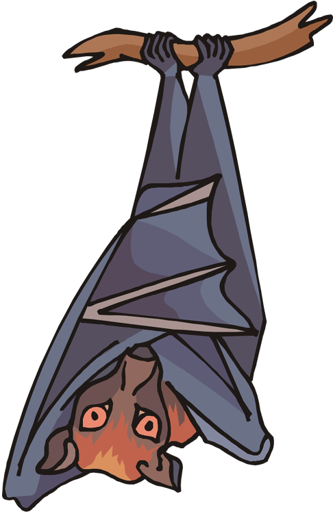 cartoon image of a big fruit bat at rest